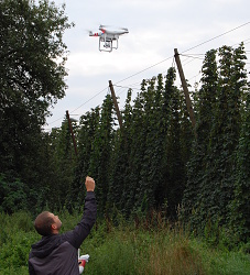 DRONE INSPECTING THE HOP GARDENS